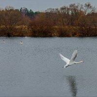 Над озером... :: Наталья