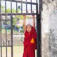 Мальчик из буддийского монастыря :: Сергей Козинцев