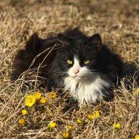 Кошка :: Денис Матвеев