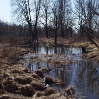 Весна в лесу :: Андрей Зайцев