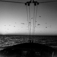 Чайки :: Николай Леммер