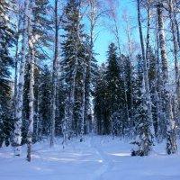Тропка в лесу :: aksakal88