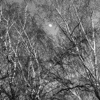 Деревья и луна :: Ирина Корнеева