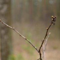 Прогулка по лесу... :: Anastasia Grishkevich
