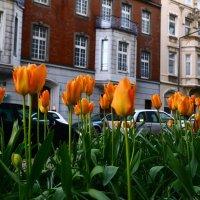 опять весна на белом свете ... :: alexx Baxpy