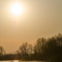 Тепло весеннего солнца :: Алексей -