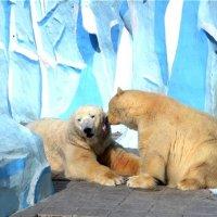 медвежья любовь :: cfysx