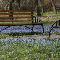 И у скамеек бывает весна... :: Михаил