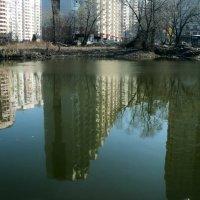 Заброшенный пруд в черте города Котельники Белая дача кишащий мальками рыбок! :: Ольга Кривых
