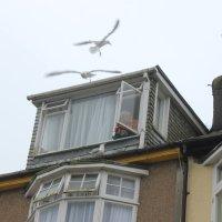 do not feed seagulls;-) :: Olga