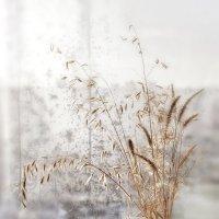 Весенний этюд с осенними травами... :: Лилия *