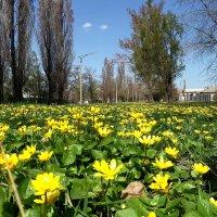 Весна в моём городе... :: Сергей Петров