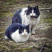 кошачья любовь :: Виктория Жуланова