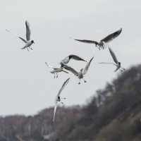 Чайки. Фото 3 :: Александр Степовой