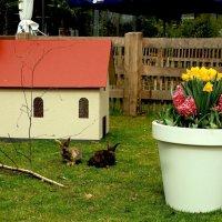 Королевская жизнь у кроликов :: Alexander