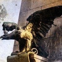 Имперский птиц под гнётом голубей. :: Хась Сибирский