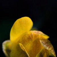 Природные миниатюры :: Gleipneir Дария