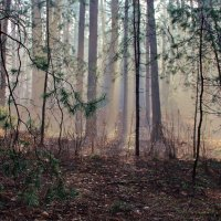 Весны лучистые туманы... :: Лесо-Вед (Баранов)