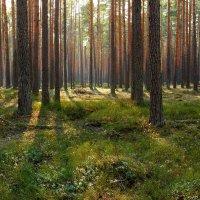 Сказочный лес :: Angelika Faustova