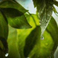 Дождь идёт :: Хась Сибирский