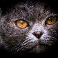 Посмотри мне в глаза- что ты видеш ? :: Vladimir Volkov
