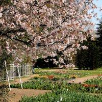 Весна на флоре :: Alexander Andronik