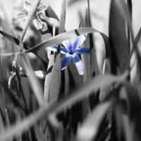 Черно-белая весна :: Маргарита Serebryakova