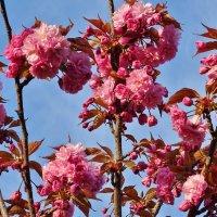 Бурный всплеск весны. :: СветЛана D