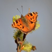 Бабочки летают, бабочки... :: Ольга Русанова (olg-rusanowa2010)