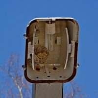 Осиное гнездо в прожекторе :: grovs