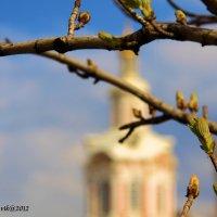 весна :: виктор ------