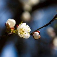 Весна... :: Денис Пшеничный