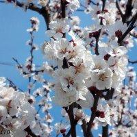 Городская весна :: Нина Бутко