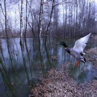фотоохота :: Сергей Яснов