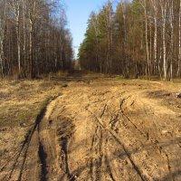 IMG_5152 - Классический апрель :: Андрей Лукьянов