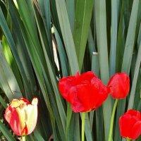 Городские цветы... :: СветЛана D