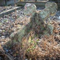 На Смоленском кладбище :: Ева Олерских