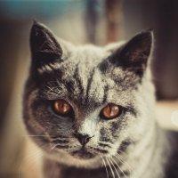 Даже самое маленькое из кошачьих – совершенство. :: Da Zh