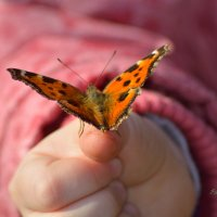 Лети, бабочка! :: Виктор Филиппов
