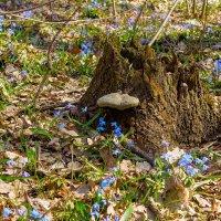 Весной зацветает все... :: Юрий Стародубцев