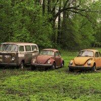 Beetle family :: Arman S