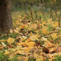 Кленовые листья :: Нина Костина