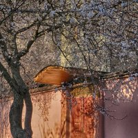 Весна на ташкентской улице :: Елена Чаусова