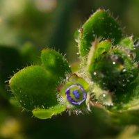 Природные миниатюры :: Бабочка :: Gleipneir Дария