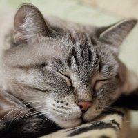 киса спит, она устала!!! :: Алена Дегтярёва