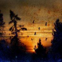На закате :: Хась Сибирский