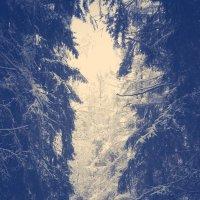 зимнее2 :: BioJ .