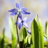 первые цветы :: Katrin Galitsina