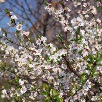 Весна! :: Denis Aksenov