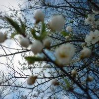 какое...небо.....голубое)) :: Oxi --